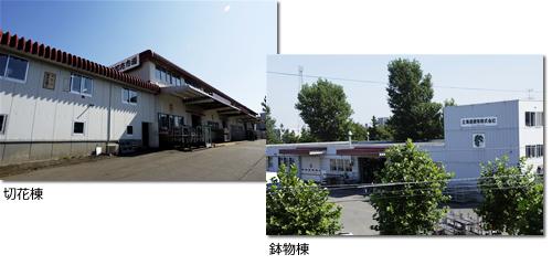 札幌花き地方卸売市場 切花棟・鉢物棟 外観